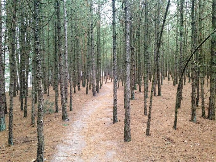 Panoramic shot of trees growing in forest