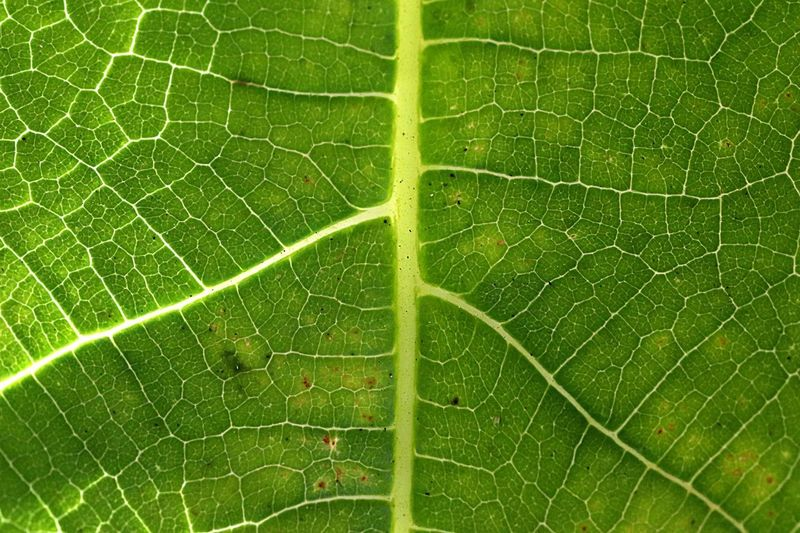 Green Color Nature Leaf Close-up Plant Plant Part Natural Pattern Beauty In Nature Backgrounds Full Frame Leaf Vein No People Outdoors Fragility Day