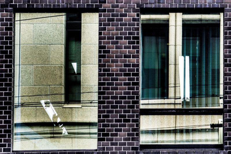 Flower Silhouette / Window Reflection