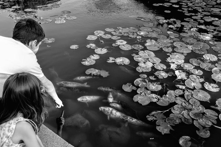 Visual Journal September 2018 Lincoln, Nebraska S.ramos September 2018 Lincoln, Nebraska Sunken Gardens Always Making Photographs Camera Work Photowalk Tourist Destination EyeEm Best Shots Eye For Photography Getty Images FUJIFILM X100S Off Camera Flash Visual Journal Photo Diary Long Form Storytelling Photo Essay Formal Garden Monochrome Schwarzweiß Pond Reflections Koi Pond Koi 恋 B&W Collection Water Real People Nature Two People Rear View Women Flower Child Lake Togetherness Lifestyles Leisure Activity Childhood High Angle View People Day Girls Men Outdoors Floating On Water
