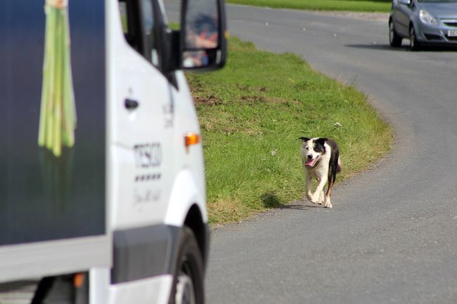 Littlest Man Dog Lost Dog On The Road Van Be Careful Taking Photos Check This Out Enjoying Life Hungry Dog