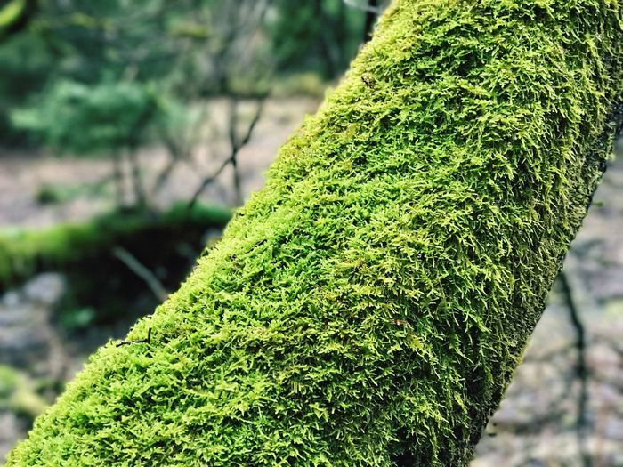 Green Color Growth Nature Tree Moss Outdoors
