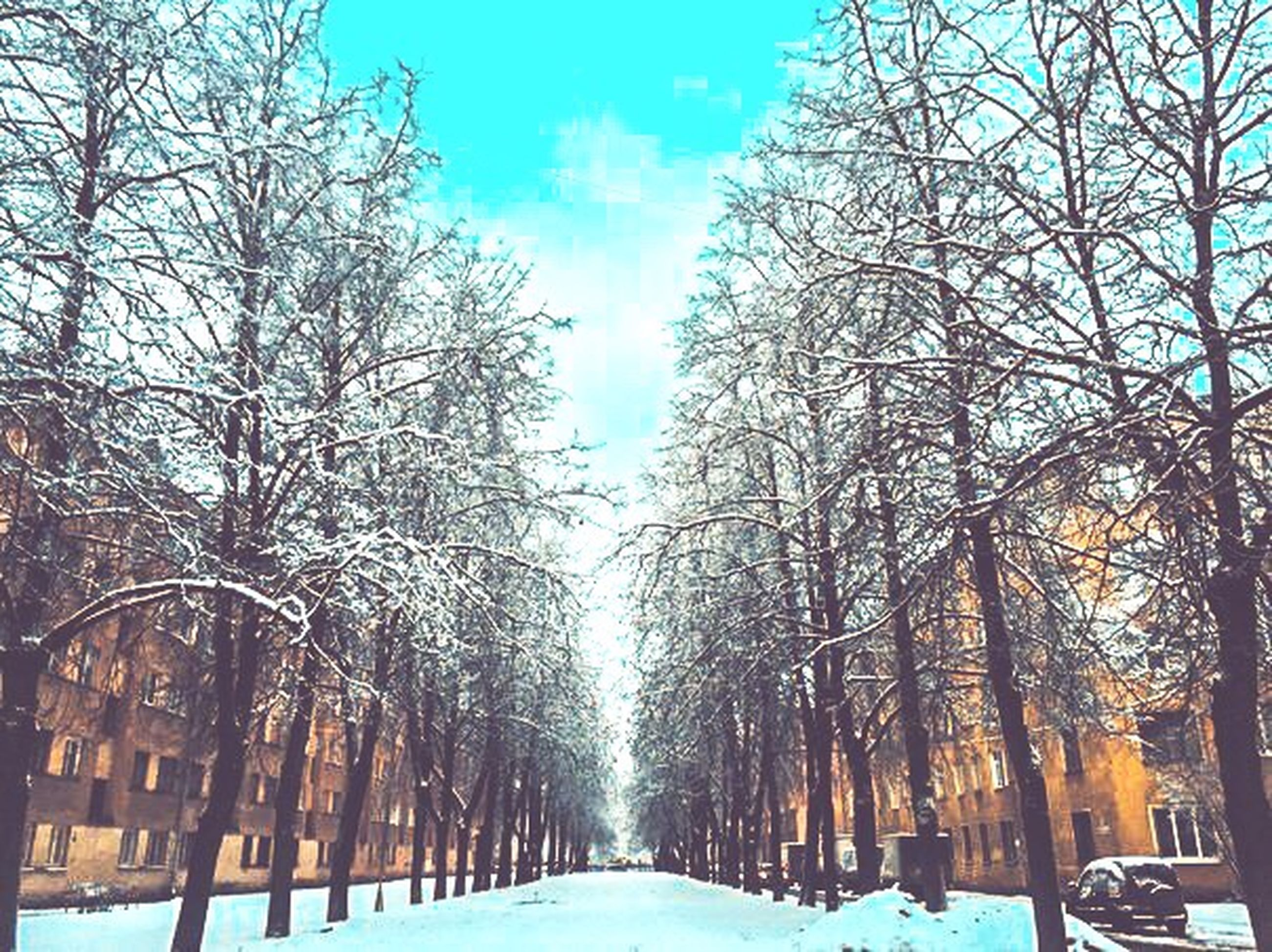 tree, bare tree, the way forward, transportation, snow, cold temperature, winter, diminishing perspective, season, road, treelined, sky, vanishing point, car, branch, street, built structure, nature, weather, covering