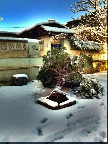 Tree My Tree 😕 Snowing Snow ❄ Taking Photos House Nature Nature_collection Check This Out Death