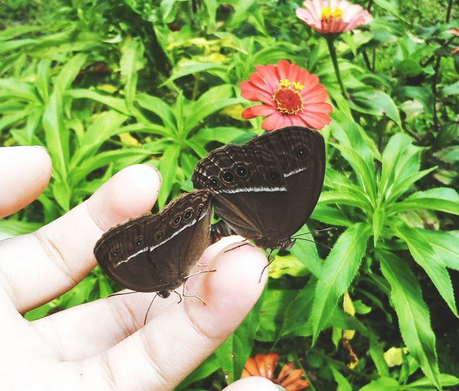 nature make us alive... #LoveLife  #Blessed Human Hand Leaf Holding Human Finger Plant Green Color Butterfly Inner Power