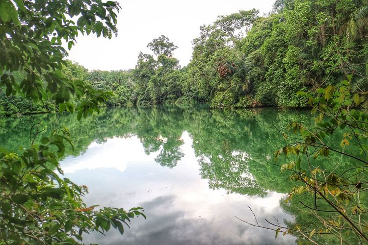 Scenic reflection of plants in calm lake