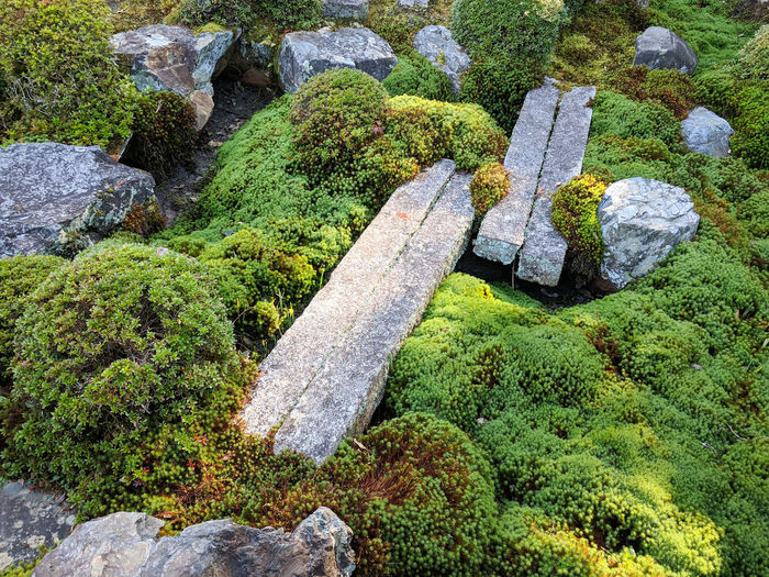 Rock Solid Moss