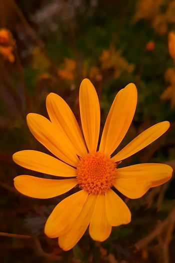 Flower Petal Nature Fragility Beauty In Nature Plant Yellow Outdoors Freshness Close-up Paint The Town Yellow