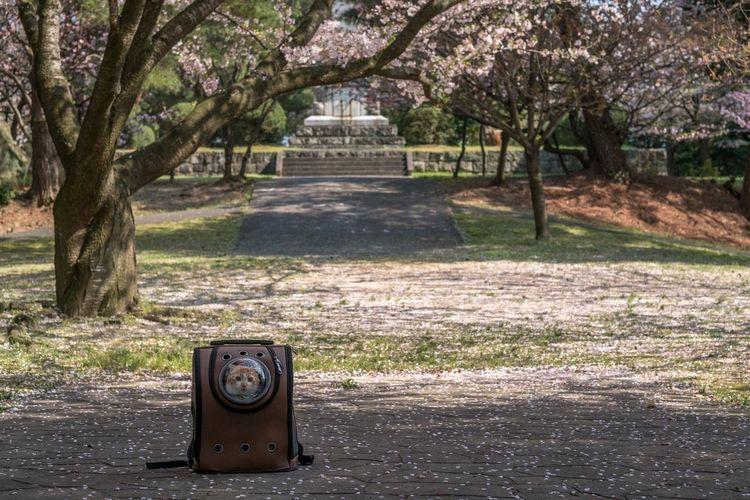 Long Goodbye Tree No People Japan Cherry Blossom Cat