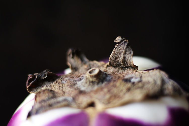 Close-up of insect on wood against black background