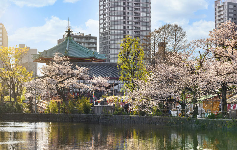 Cherry blossom by river and buildings against sky
