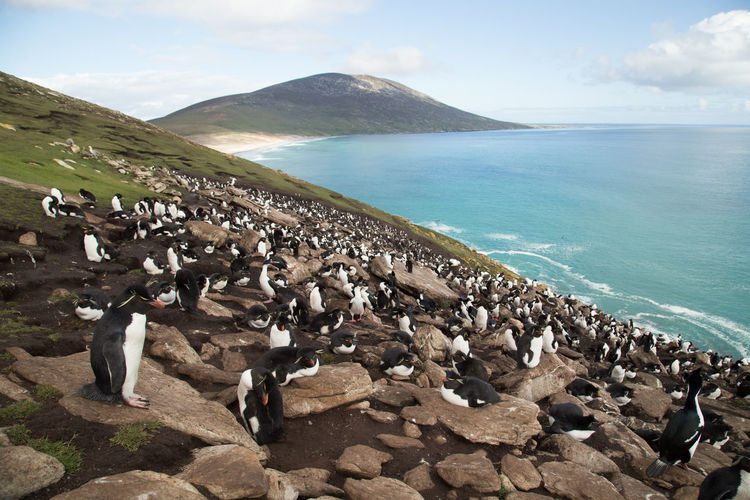 Penguins on rock at sea against sky