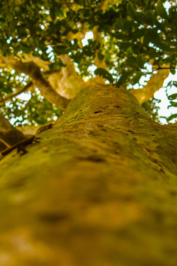 tree Beauty In Nature Close-up Day Growth Low Angle View Nature No People Outdoors Scenics Tranquility Tree Vertical