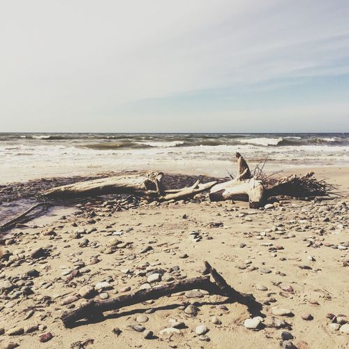Drift wood at sea shore against sky