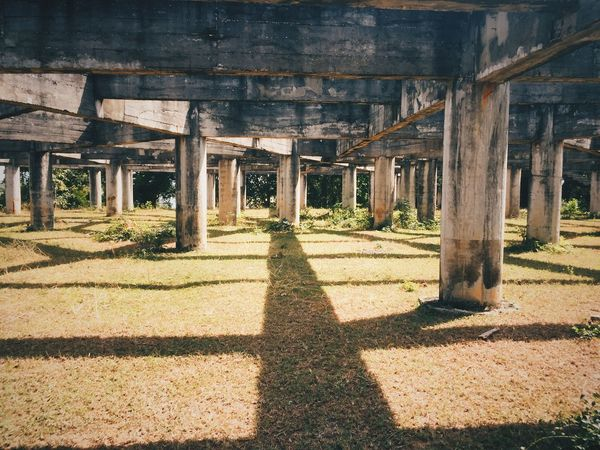 Architecture Built Structure Shadow Architectural Column Sunlight Nature Day The Way Forward Building No People Direction Plant Outdoors Building Exterior Tree Transportation Bridge In A Row Bridge - Man Made Structure Focus On Shadow