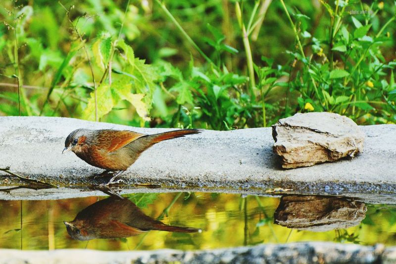 Close-up of lizard on wood against lake