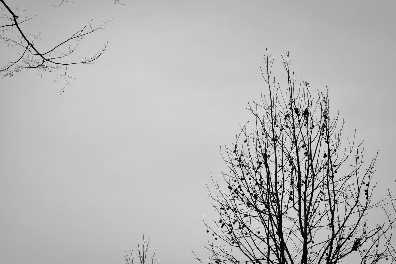 bare tree, branch, nature, beauty in nature, tree, clear sky, no people, outdoors, day, sky