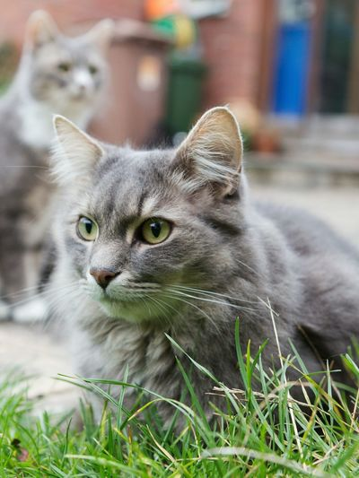 Two cool cats Check This Out Cats Cat♡ Catlovers Cats Of EyeEm Nature Nature_collection