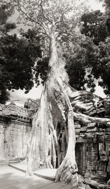 Deep roots into history Tree Water Sky Close-up Growing
