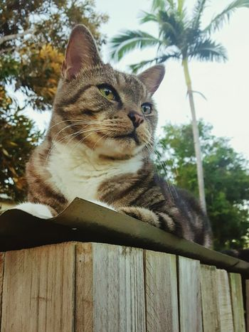 One Animal Mammal Domestic Cat Domestic Animals Pets Feline Animal Themes Animal Portrait Looking At Camera No People Outdoors Day Sitting Tree Sky Close-up