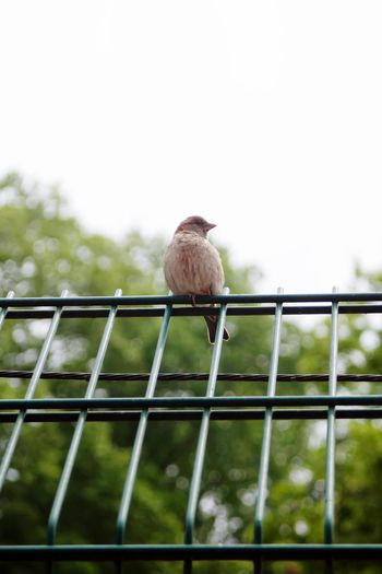 Low angle view of bird perching on metal fence