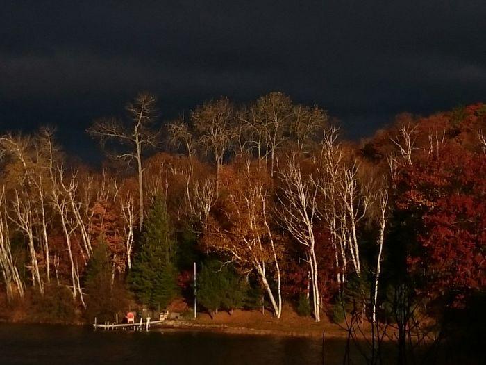 Dynamic fall mornings.. Muskoka, Autumn, Leaves, Lake, Nature