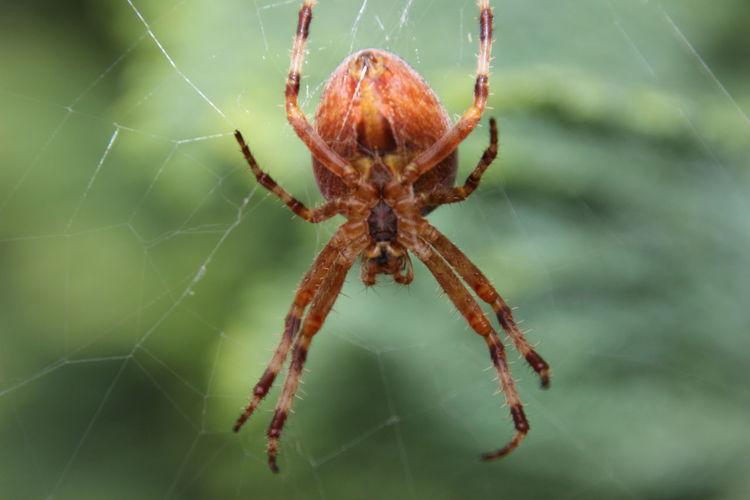 Animal Leg Trapped Web Leg Spider Web Insect Spider Full Length Survival Danger