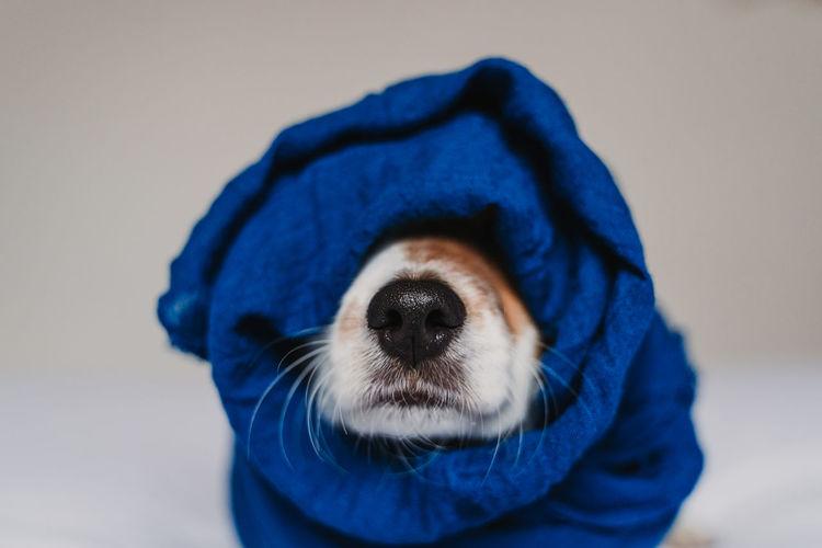 Close-up of dog wearing headscarf