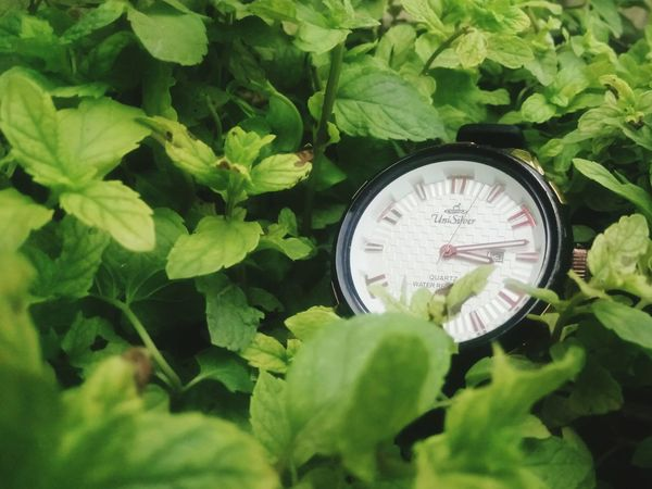 Time Clock Leaf Green Color Clock Face Watch Old-fashioned Plant No People Growth Minute Hand Day Outdoors uni silver