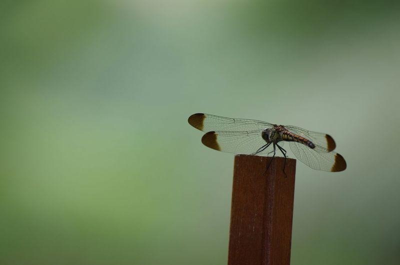 植物園 昆虫 虫 緑化植物園 緑地公園 トンボ