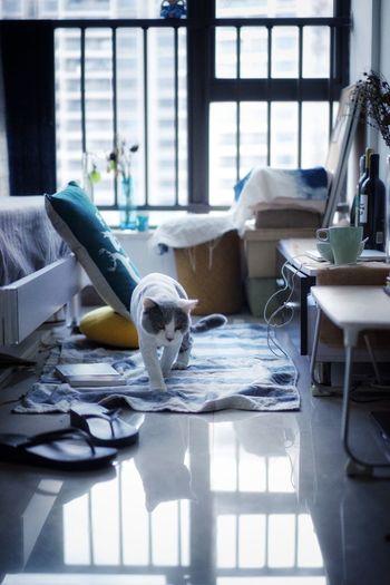 铲屎官 Day Indoors  Cat No People
