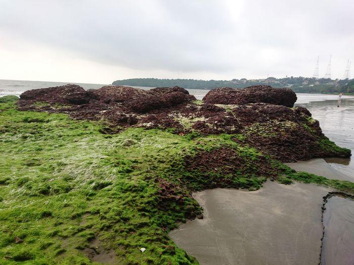2016 Bambolim Beach Goa India Nature Outdoors Sea Sky