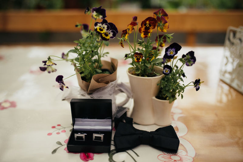 Bow Close-up Cufflinks Day Flower Flower Head Freshness Indoors  Nature No People Pansy Plant Table Vase