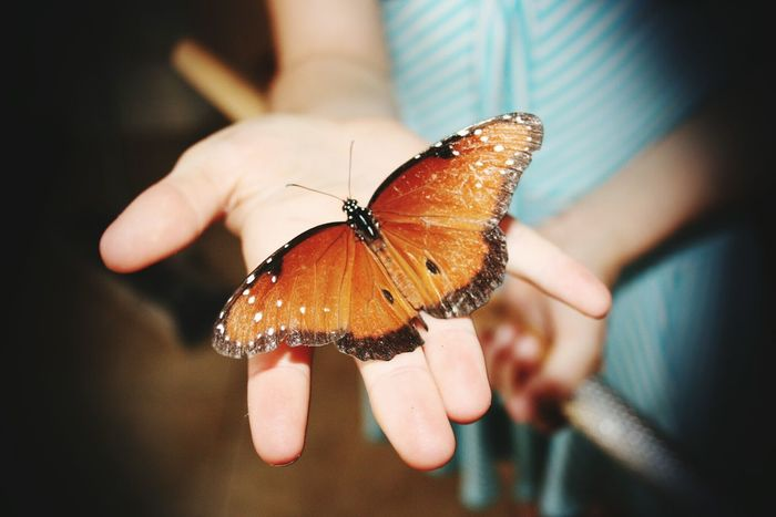 Butterfly Hand Naturelover Young Girl Insect Florida United States Capture The Moment Hands At Work