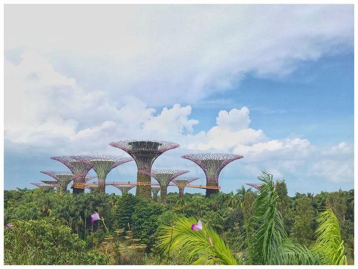 Plants growing on bridge against sky