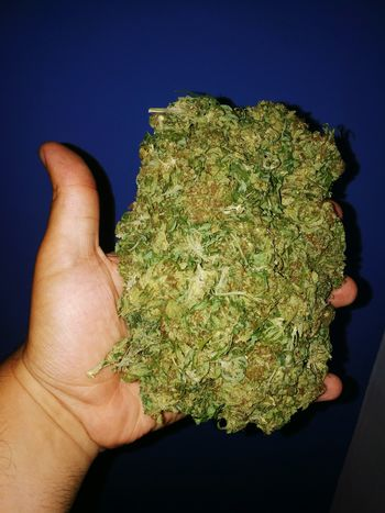 Alternative Medicine Marijuana - Herbal Cannabis Weed Cannabis Marihuana Marihuanaparatodos! Marihuana Legal Cannabis.👌🍁 Cannabis Culture Cannabisculture Cannabis Community Cannabis Flower Cannabis Art Cannabiscrew