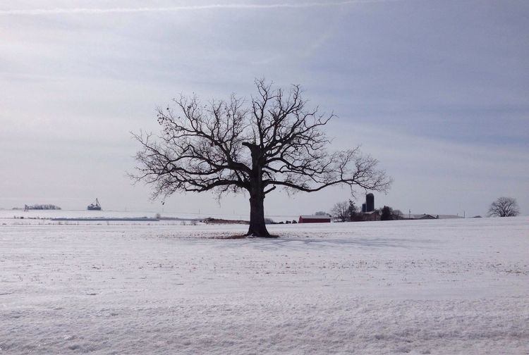 IPSNoFilter Hugging A Tree I love trees with no leaves, especial this one that stands in farm land.