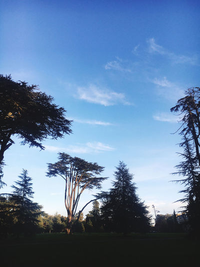 Low angle view of silhouette trees on field against sky