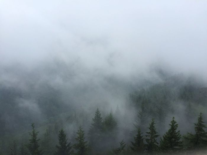 Hike Hiking Forest Cool Grey Foggy Fog Clouds And Sky Clouds Cloudy Sky Blackforest Trees Nature Hill Valley