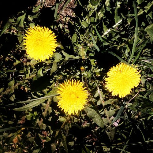 Flower Yellow Nature Freshness Growth Beauty In Nature Fragility Flower Head Plant No People Outdoors Close-up Day