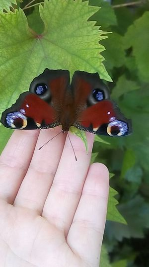 Cropped image of butterfly on leaf