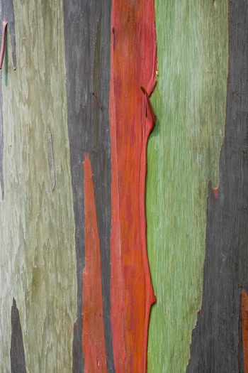Backgrounds Full Frame Wood - Material Textured  Close-up No People Pattern Paint Green Color Weathered Rough Wood Old Plank Day Tree Trunk Design Multi Colored Tree Trunk