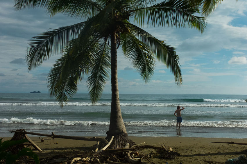 Costa Rica Nature Palm Tree Beach Beauty In Nature Jungle Ocean Pacific Ocean Wildlife