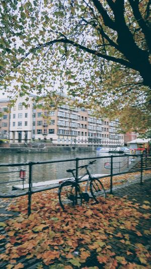 canal bike Photowalktheworld EyeEm Selects Country Canal Riverside Photography Tree City Water River Bicycle Branch Sky Architecture Building Exterior Built Structure Bicycle Rack Bridge - Man Made Structure Locked