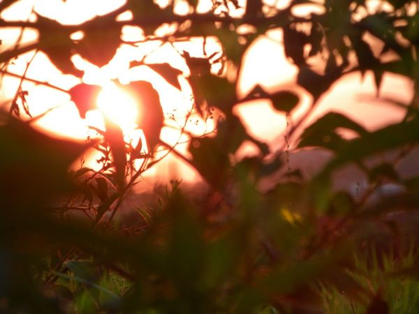 Sunset Branch Sunlight Tree Leaf Nature Plant Outdoors Close-up Sunbeam No People Sun Beauty In Nature Day