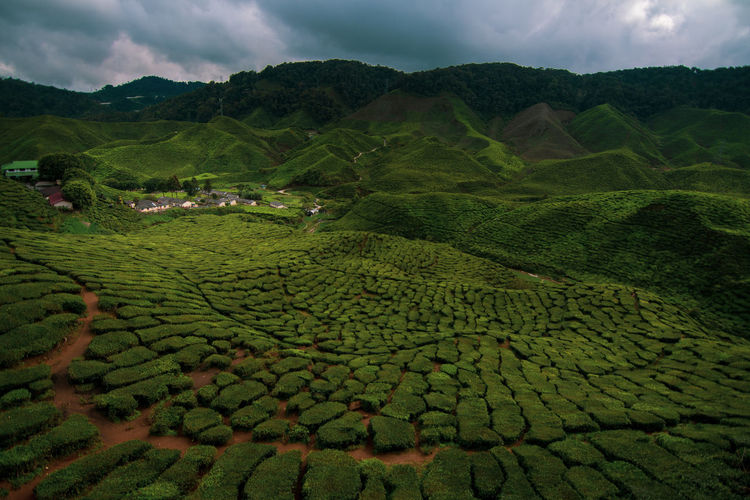 Cameron highland, pahang, malaysia tea plantation during cloudy day