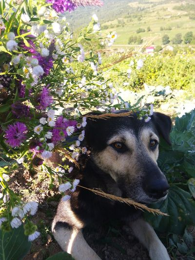 Portrait of dog with flowers