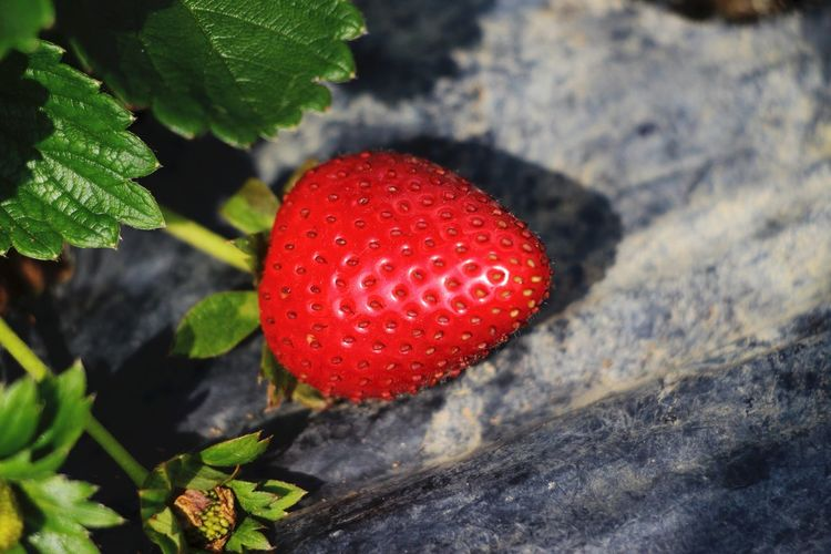 Close-up of strawberry on plant