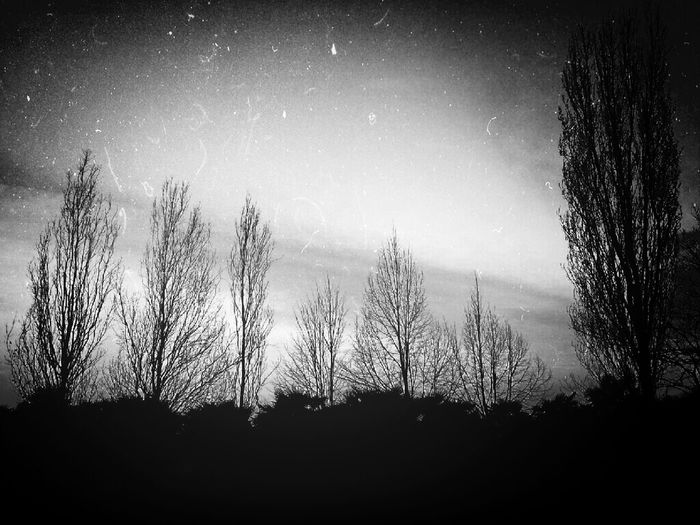 Taking Photos Nature Monochrome Blackandwhite
