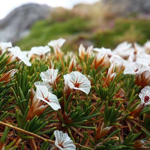 Kazdağları Millipark Beyazçiçekler Doğa
